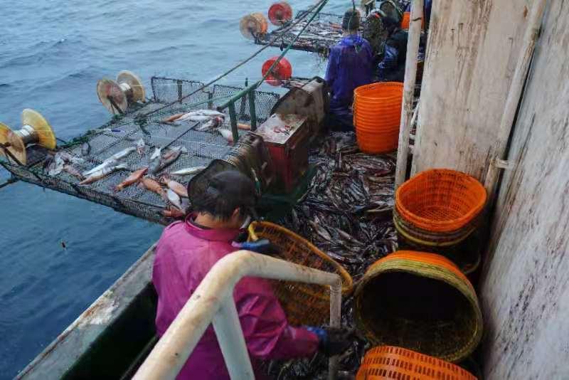 渔船守规_资源增加_中国率先试行公海休渔一年效果明显